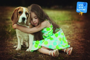 Beagle best dog breeds for families