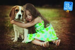Beagle best dog breeds for families