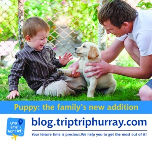 puppy arrives in family
